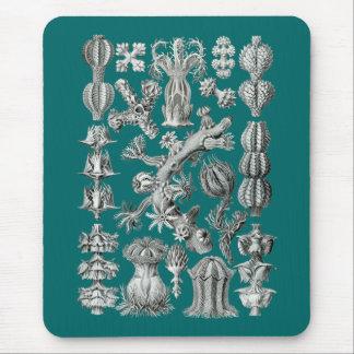 Sea fans mouse pad