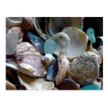 Sea Glass Shell Collected Post Card