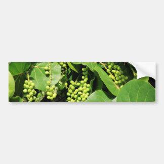 Sea Grape Leaves and Berries Bumper Sticker