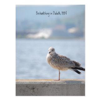 Sea Gull2, Birdwatching in Duluth, MN Postcard