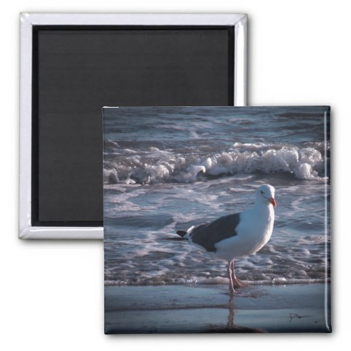 Sea gull at the beach. fridge magnets