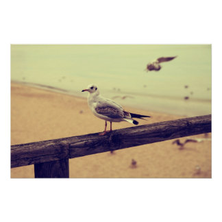 Sea gull Baltic Sea reproaches poster