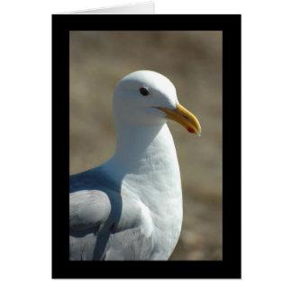 Sea Gull Cards