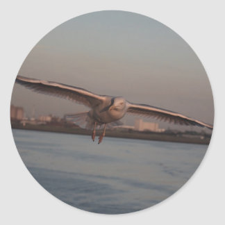 Sea gull  - every dreamed of flying? - Card Classic Round Sticker