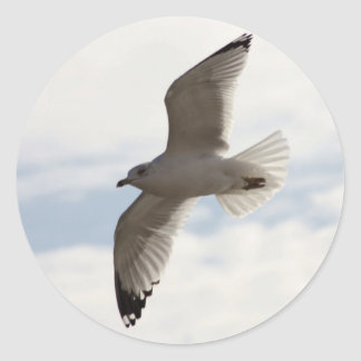 Sea gull flying high in the air stickers