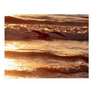 Sea gull gliding along the beach postcard