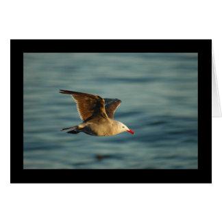 Sea Gull Greeting Card