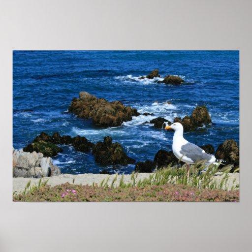 Sea Gull in front of Pacific Coastline, photo Print