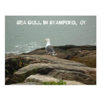 SEA GULL IN STAMFORD,  CT, $B.A.K.$ ... POSTCARD