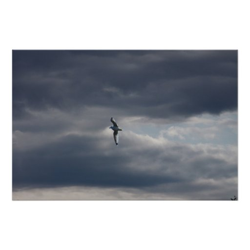 Sea Gull in the Sky Poster