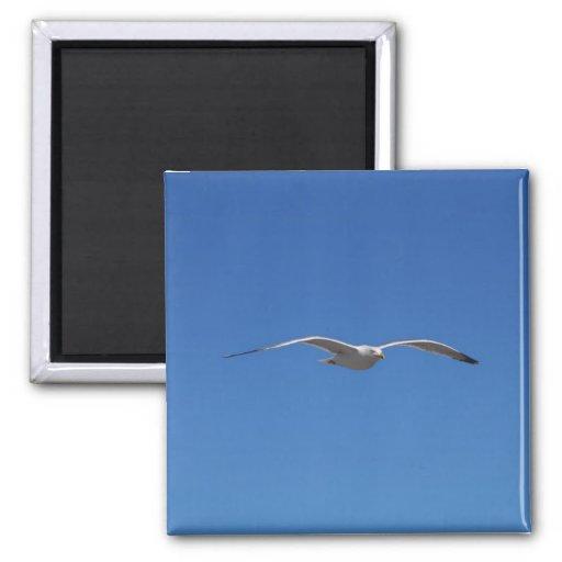 Sea gull magnet