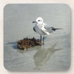 Sea Gull on Beach with Seaweed Beverage Coaster