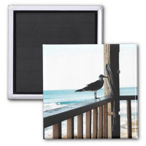 Sea Gull on Blue Lagoon Magnet