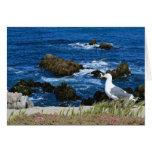 Sea Gull on Pacific Coast, Blank Note Card
