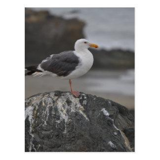 sea gull on rock at Cambria, California Postcard