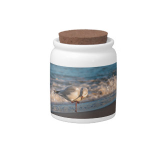 Sea gull on shore of the Baltic Sea Candy Dish