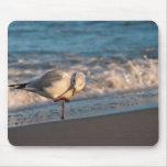 Sea gull on shore of the Baltic Sea Mousepads
