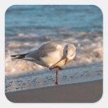 Sea gull on shore of the Baltic Sea Square Sticker