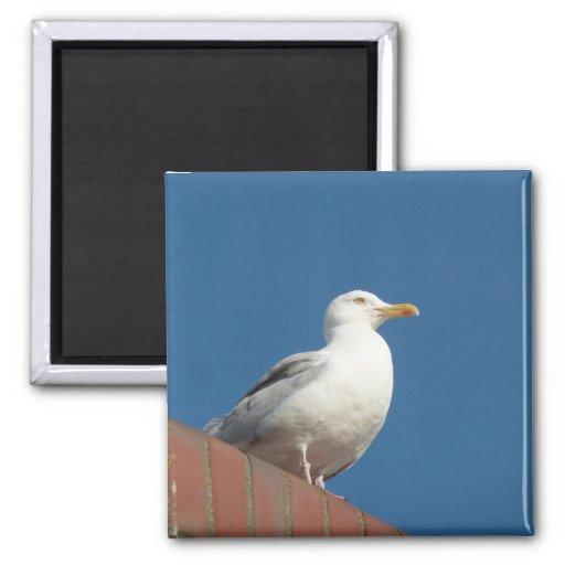 Sea gull on the island Sylt Fridge Magnet