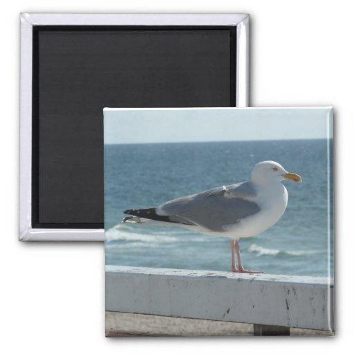 Sea gull on the island Sylt Refrigerator Magnets