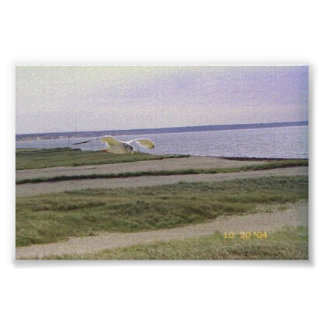 Sea Gull over Beach at Provincetown Poster