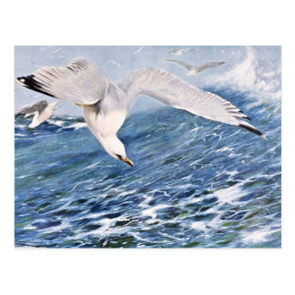 Sea Gull Over the Ocean Painting Postcard