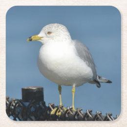 Sea Gull Party Coaster