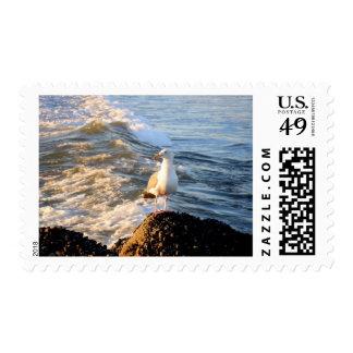 Sea Gull Postage Stamp
