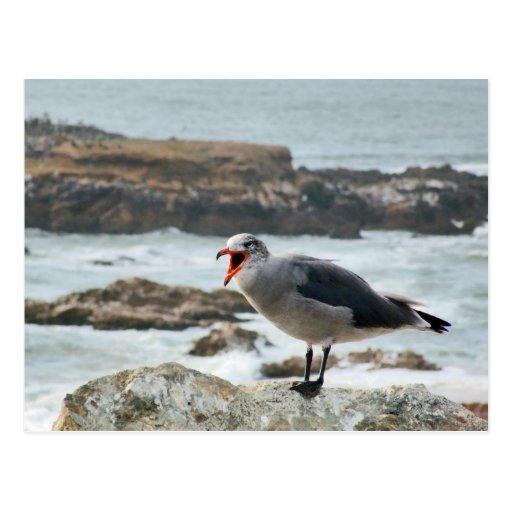 Sea Gull Postcards
