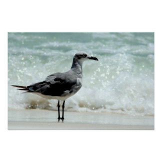 sea gull poster print