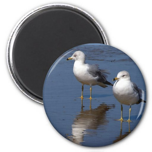 Sea Gull Reflections Magnets