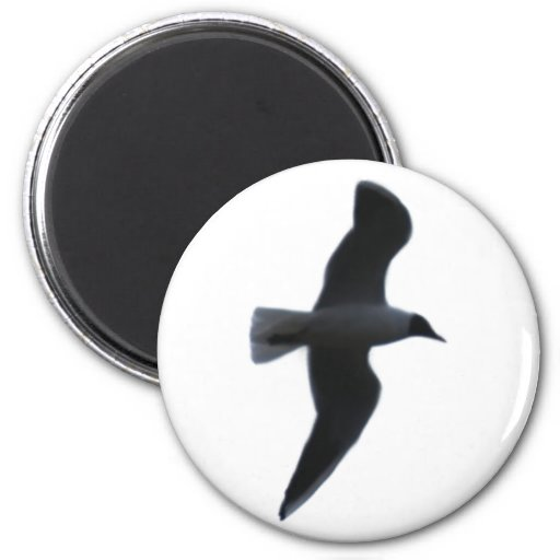 Sea gull seagull magnets
