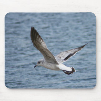 Sea gull skimming water surface for shore landing mouse pad