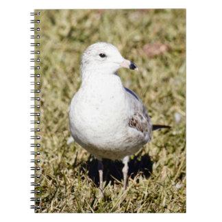 Sea Gull Spiral Photo Notebook