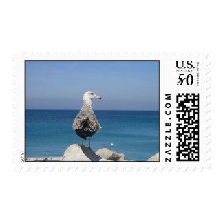 Sea Gull US Stamp