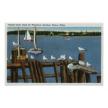 Sea Gulls and Sailboats Along the Waterfront Print