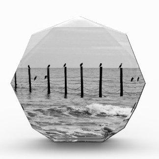 sea gulls at beach acrylic award