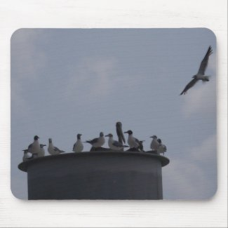 Sea Gulls Gathered, One in Flight Mouse Pad