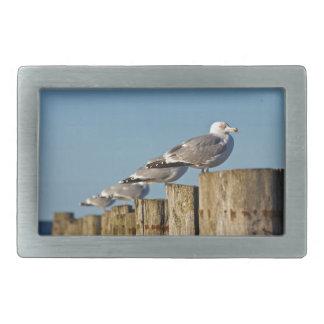 Sea gulls on a groyne on the Baltic Sea coast Belt Buckles