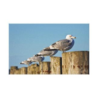 Sea gulls on groyne on the Baltic Sea coast Canvas Prints