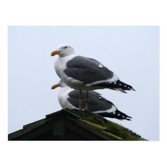 Sea Gulls Postcard