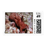 Sea hare postage stamps