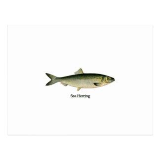 Sea Herring Postcard