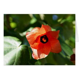 Sea Hibiscus Card