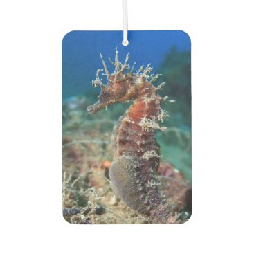 Beach Themed Sea Horse | Hippocampus Ramulosus Air Freshener
