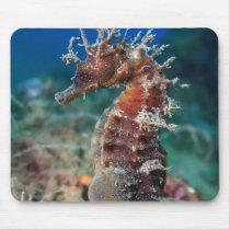 Sea Horse | Hippocampus Ramulosus Mouse Pad