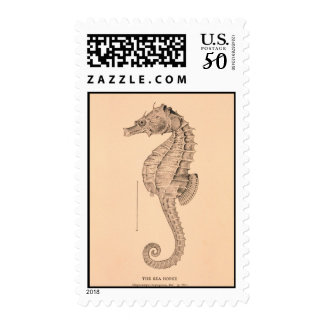 sea horse postage lithograph woodcut illustration