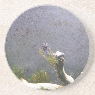 Sea Horse Sandstone Coaster