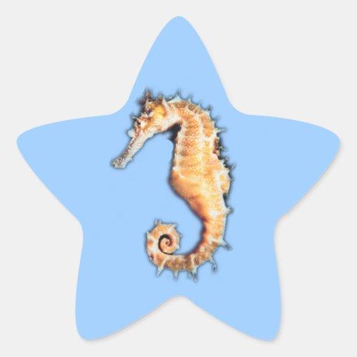 Sea horse star sticker
