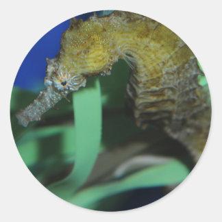 Sea Horse Round Sticker